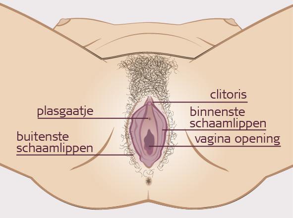 Pics vulva Category:Hairless female
