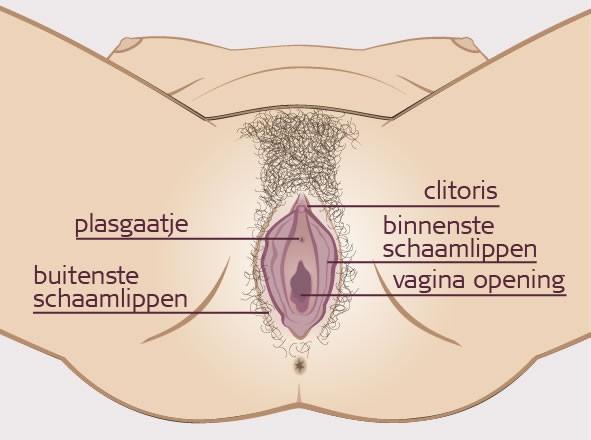 geslachtsorganen vrouw