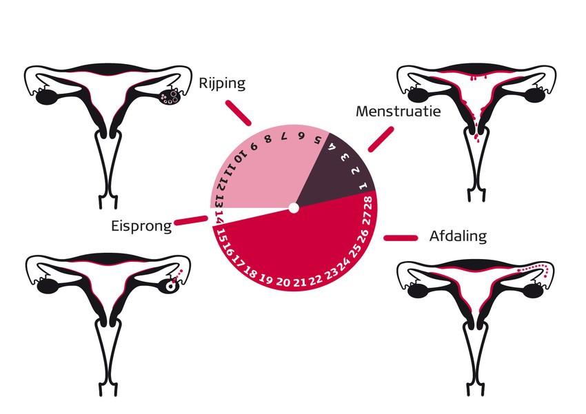 seks tijdens menstruatie
